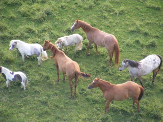 Horses from above