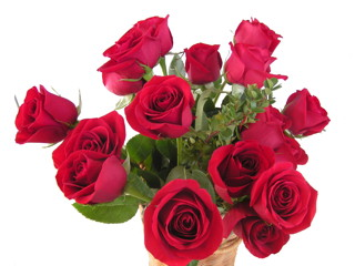 Red Roses, pure and simple