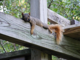 The Relaxing Squirrel